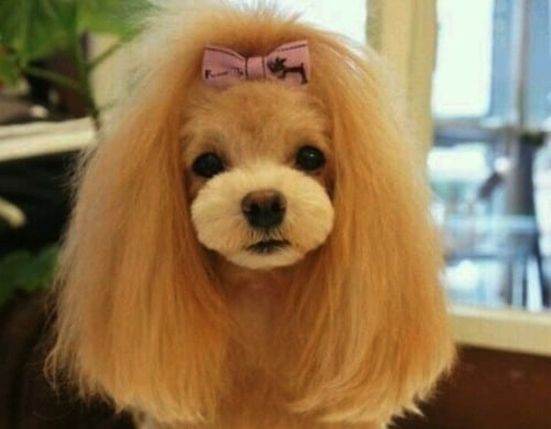 Dog-hairstyles