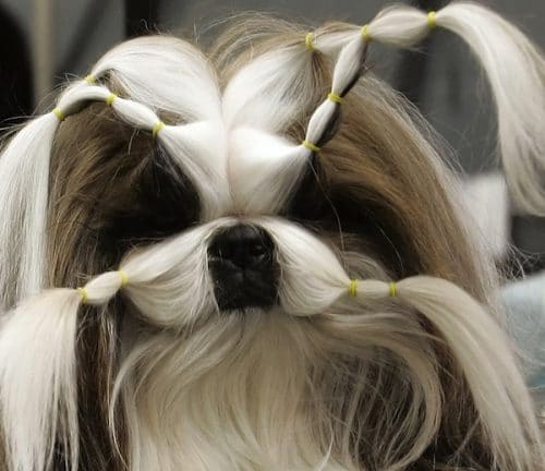 Dog hairstyles